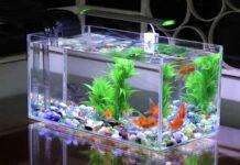 Hướng dẫn cách vệ sinh bể cá, hồ cá cảnh đúng cách