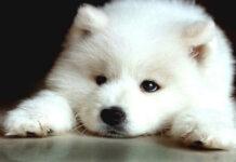 Chó không được ăn gì? Cẩm nang dinh dưỡng cho người nuôi chó